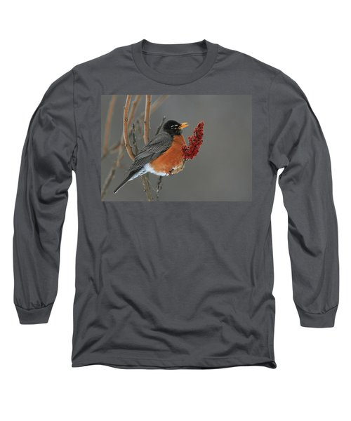 American Robin On Sumac Long Sleeve T-Shirt