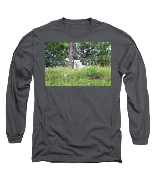 Arctive Wolf Lying Down Long Sleeve T-Shirt