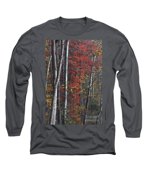 Autumn Trees 8261c Long Sleeve T-Shirt