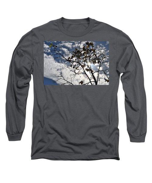 Autumn Yellow Back-lit Tree Branch Long Sleeve T-Shirt by Matt Harang