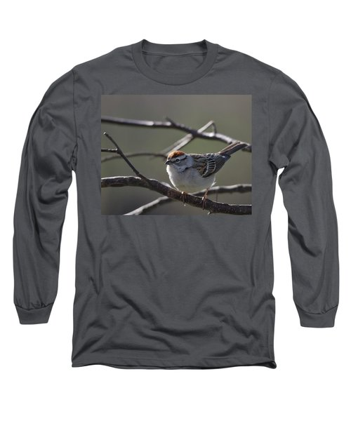 Long Sleeve T-Shirt featuring the photograph Backlit Chipping Sparrow by Susan Capuano