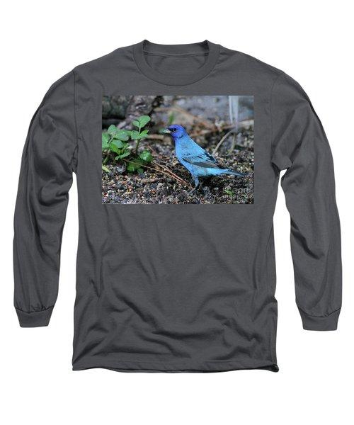 Beautiful Indigo Bunting Long Sleeve T-Shirt
