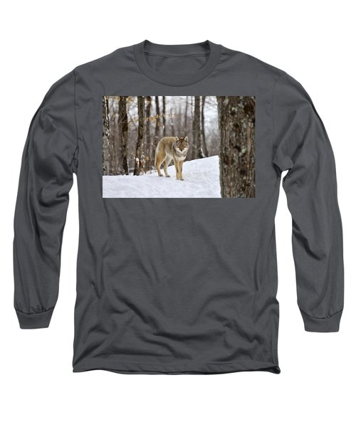 Beauty Of The Woods Long Sleeve T-Shirt
