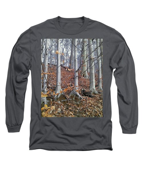 Beech Trees Long Sleeve T-Shirt