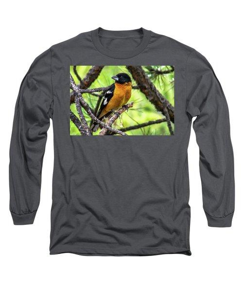 Black-headed Grosbeak Long Sleeve T-Shirt by Marilyn Burton