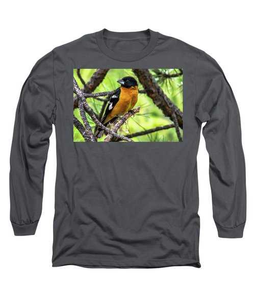Black-headed Grosbeak Long Sleeve T-Shirt