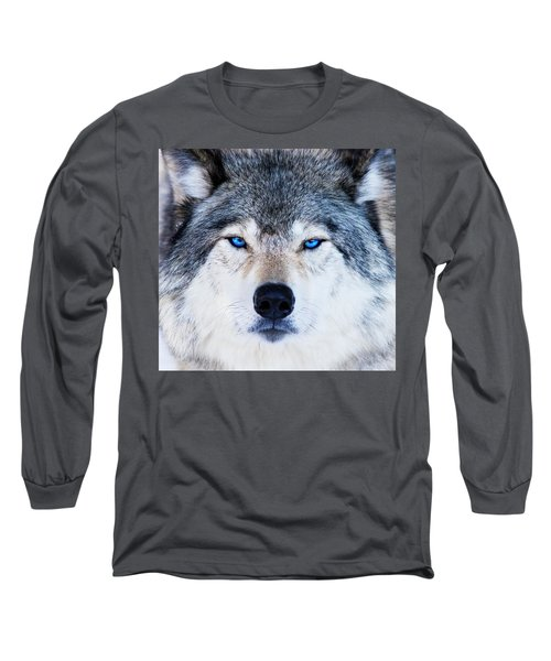 Long Sleeve T-Shirt featuring the photograph Blue Eyed Wolf Portrait by Mircea Costina Photography