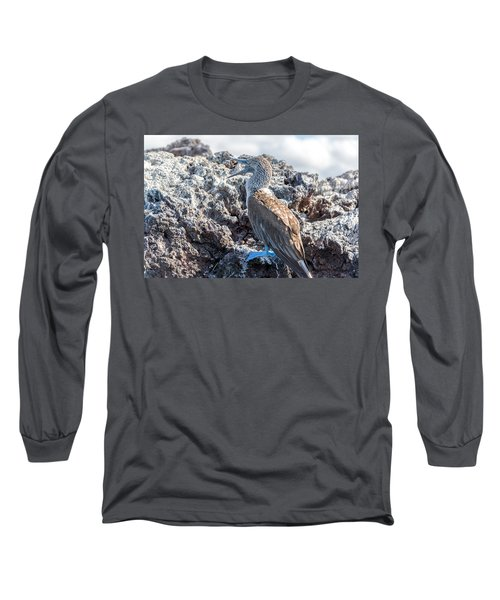 Blue Footed Booby Long Sleeve T-Shirt by Jess Kraft