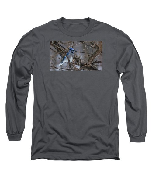 Blue Jay Long Sleeve T-Shirt by Dan Traun