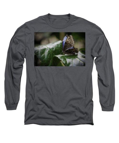 Blue Morpho On A Leaf Long Sleeve T-Shirt by Jason Moynihan