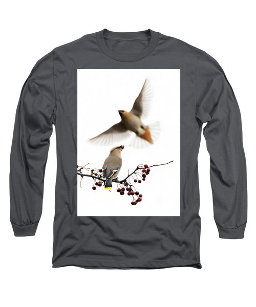 Long Sleeve T-Shirt featuring the photograph Bohemian Waxwings by Mircea Costina Photography