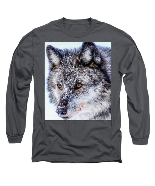 Canadian Grey Wolf In Portrait, British Columbia, Canada Long Sleeve T-Shirt