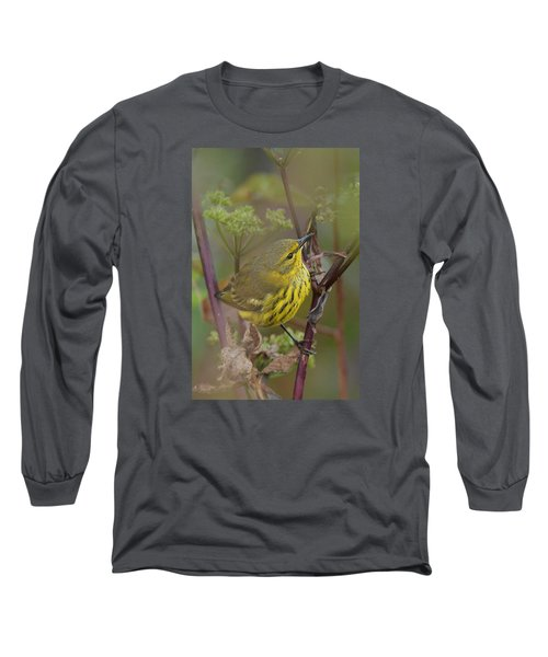 Cape May Warbler In Wees Long Sleeve T-Shirt by Alan Lenk