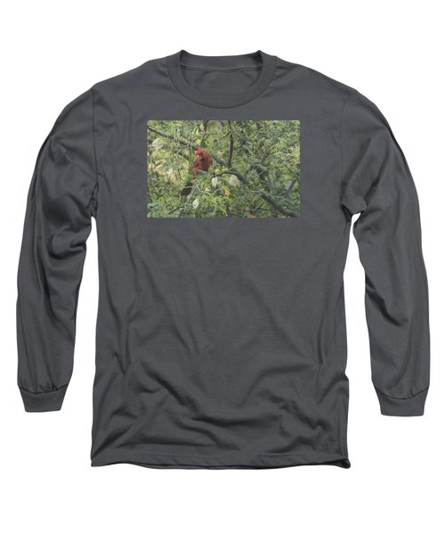 Cardinal In Mesquite Long Sleeve T-Shirt