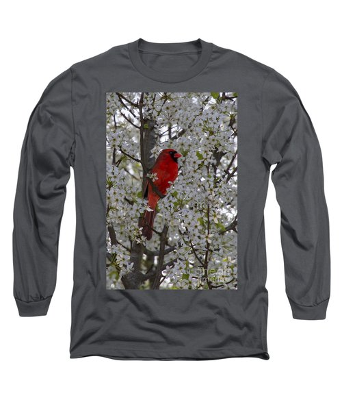Cardinal In White Blossoms Long Sleeve T-Shirt by Barbara Bowen