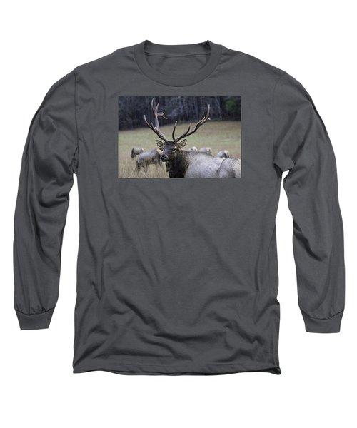 Cataloochee Elk Long Sleeve T-Shirt