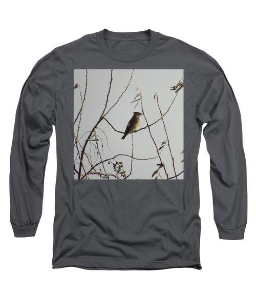 Cedar Wax Wing In Tree Long Sleeve T-Shirt