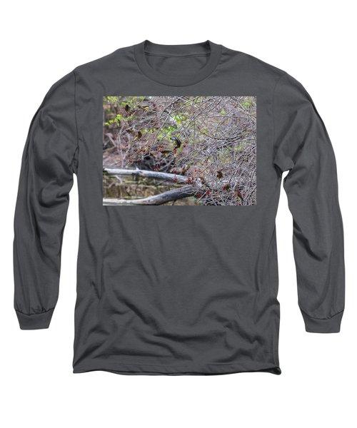 Cedar Waxwings Feeding Long Sleeve T-Shirt by Edward Peterson