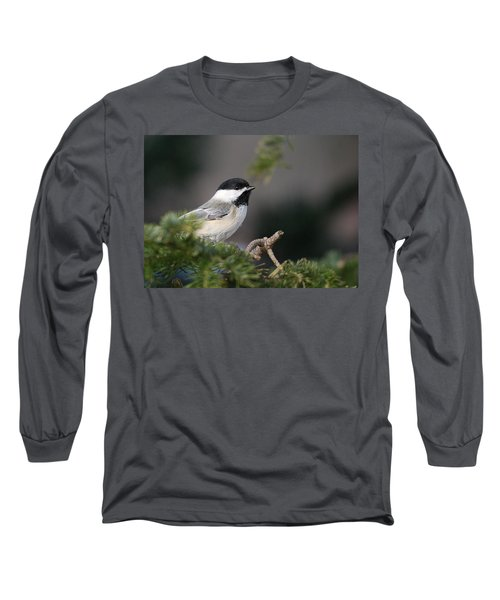 Long Sleeve T-Shirt featuring the photograph Chickadee In Balsam Tree by Susan Capuano