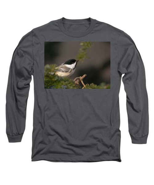 Long Sleeve T-Shirt featuring the photograph Chickadee In The Shadows by Susan Capuano