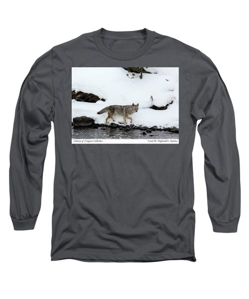Coyote In Yellowstone National Park Long Sleeve T-Shirt by Carol M Highsmith