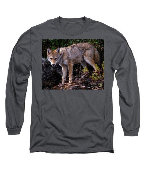 Coyote Portrait Long Sleeve T-Shirt