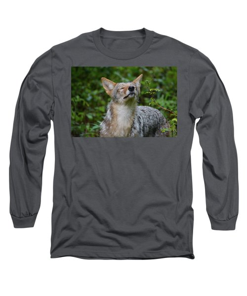 Coyote Soaking Up The Morning Sun Long Sleeve T-Shirt