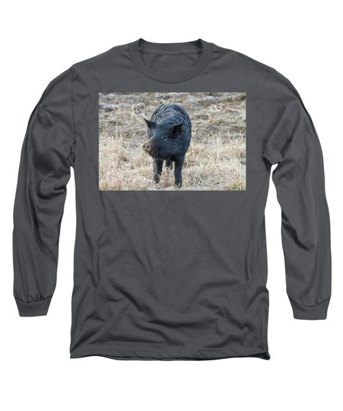Long Sleeve T-Shirt featuring the photograph Cute Black Pig by James BO Insogna