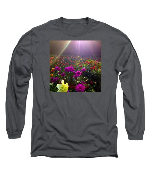 Dahlias Kissed By Sun-rays  Long Sleeve T-Shirt