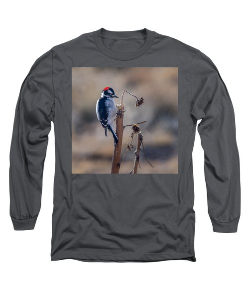 Downy Woodpecker Finding Insects From Sunflower Stem. Long Sleeve T-Shirt by John Brink