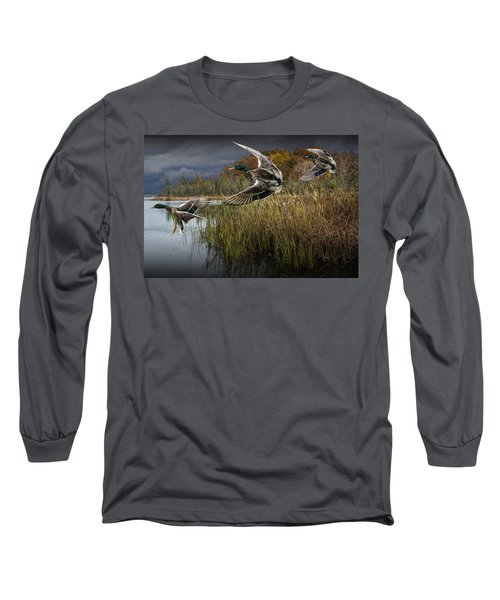 Drake Mallard Ducks Coming In For A Landing Long Sleeve T-Shirt