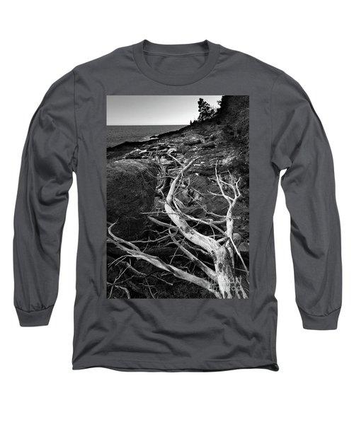 Driftwood Tree, La Verna Preserve, Bristol, Maine  -20999-30003 Long Sleeve T-Shirt