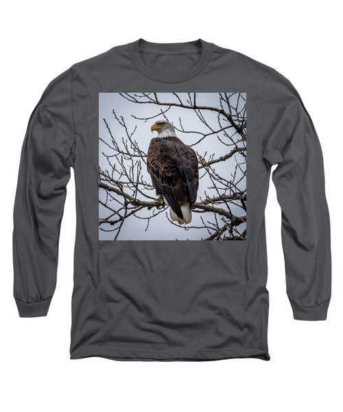 Long Sleeve T-Shirt featuring the photograph Eagle Perched by Paul Freidlund