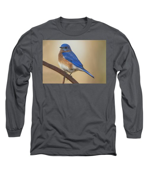 Eastern Blue Bird Male Long Sleeve T-Shirt