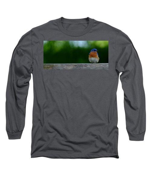 Eastern Bluebird - Male Long Sleeve T-Shirt