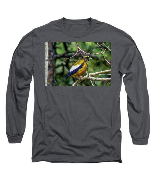 Evening Grosbeak On Aspen Long Sleeve T-Shirt by Marilyn Burton