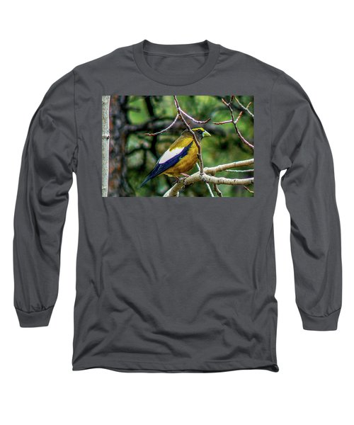 Evening Grosbeak On Aspen Long Sleeve T-Shirt