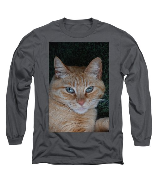 Fat Cats Of Ballard 5 Long Sleeve T-Shirt