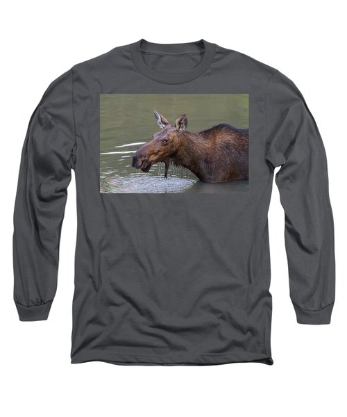 Long Sleeve T-Shirt featuring the photograph Female Moose Head Shot by James BO Insogna