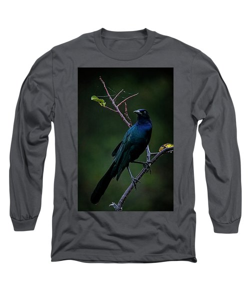 Male Boat-tailed Grackle Long Sleeve T-Shirt by Cyndy Doty