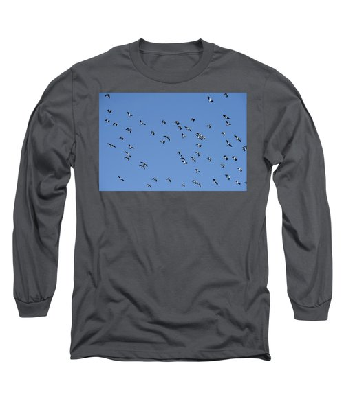 Flock Of Migratory Lapwing Birds In Clear Winter Sky Long Sleeve T-Shirt by Matthew Gibson
