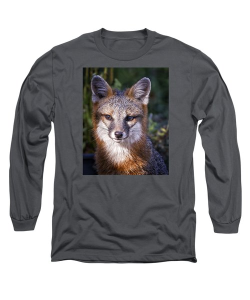 Fox Gaze Long Sleeve T-Shirt by Alan Raasch