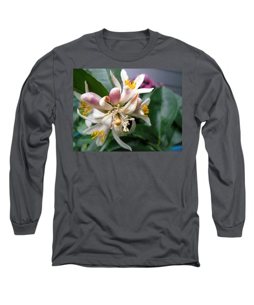 Fruit To Bear Long Sleeve T-Shirt