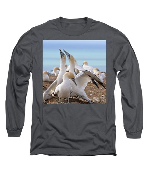 Gannets Long Sleeve T-Shirt by Werner Padarin