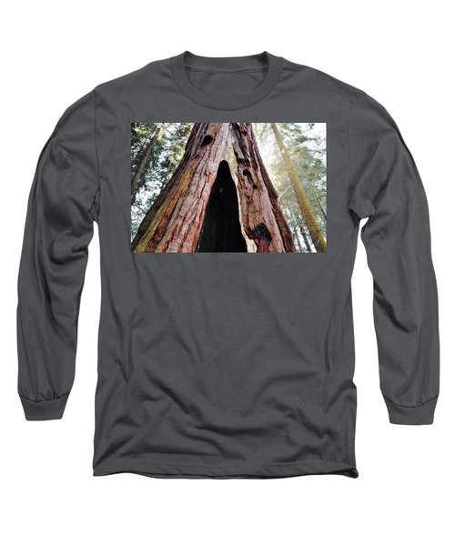 Giant Forest Giant Sequoia Long Sleeve T-Shirt