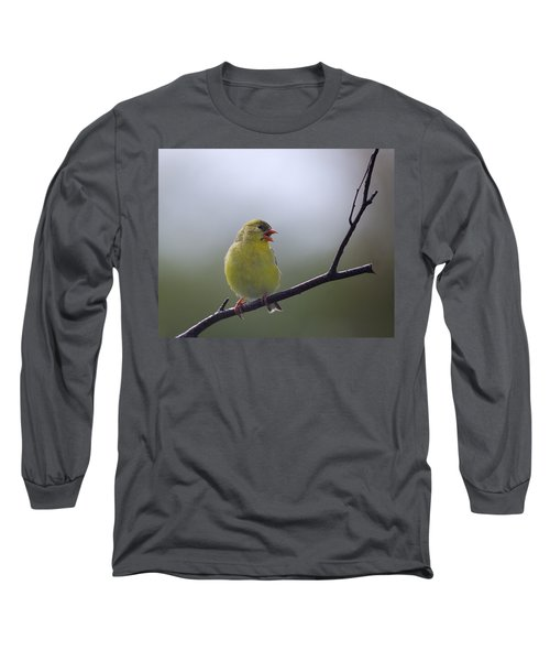 Long Sleeve T-Shirt featuring the photograph Goldfinch Song by Susan Capuano
