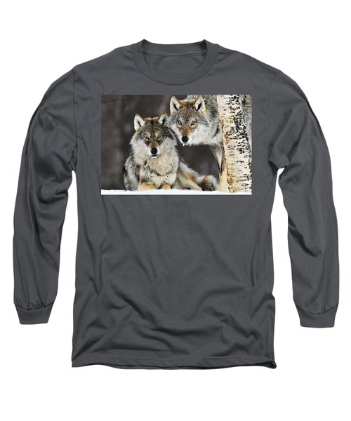 Gray Wolf Canis Lupus Pair In The Snow Long Sleeve T-Shirt