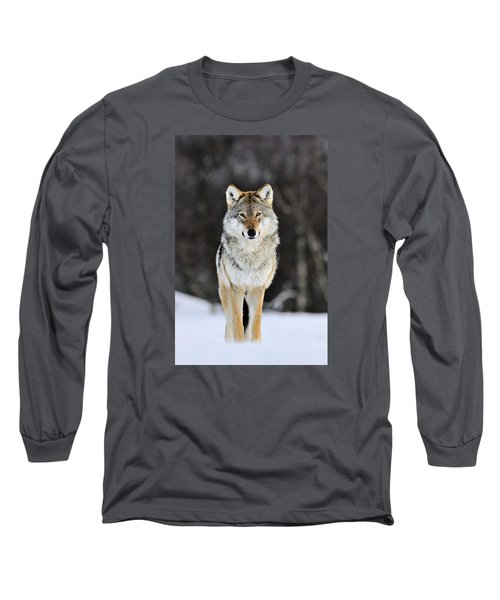 Gray Wolf In The Snow Long Sleeve T-Shirt