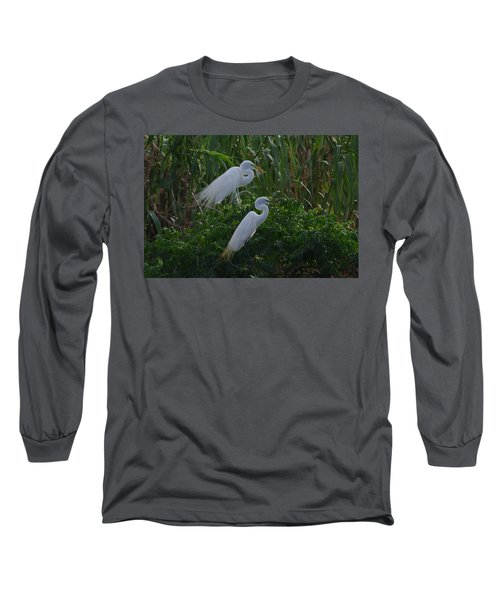 Great Egret Displays Windy Mating Plumage 2 Long Sleeve T-Shirt
