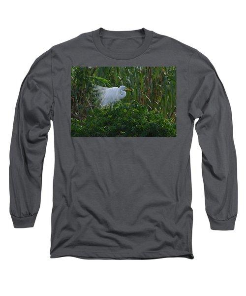 Great Egret Displays Windy Plumage Long Sleeve T-Shirt